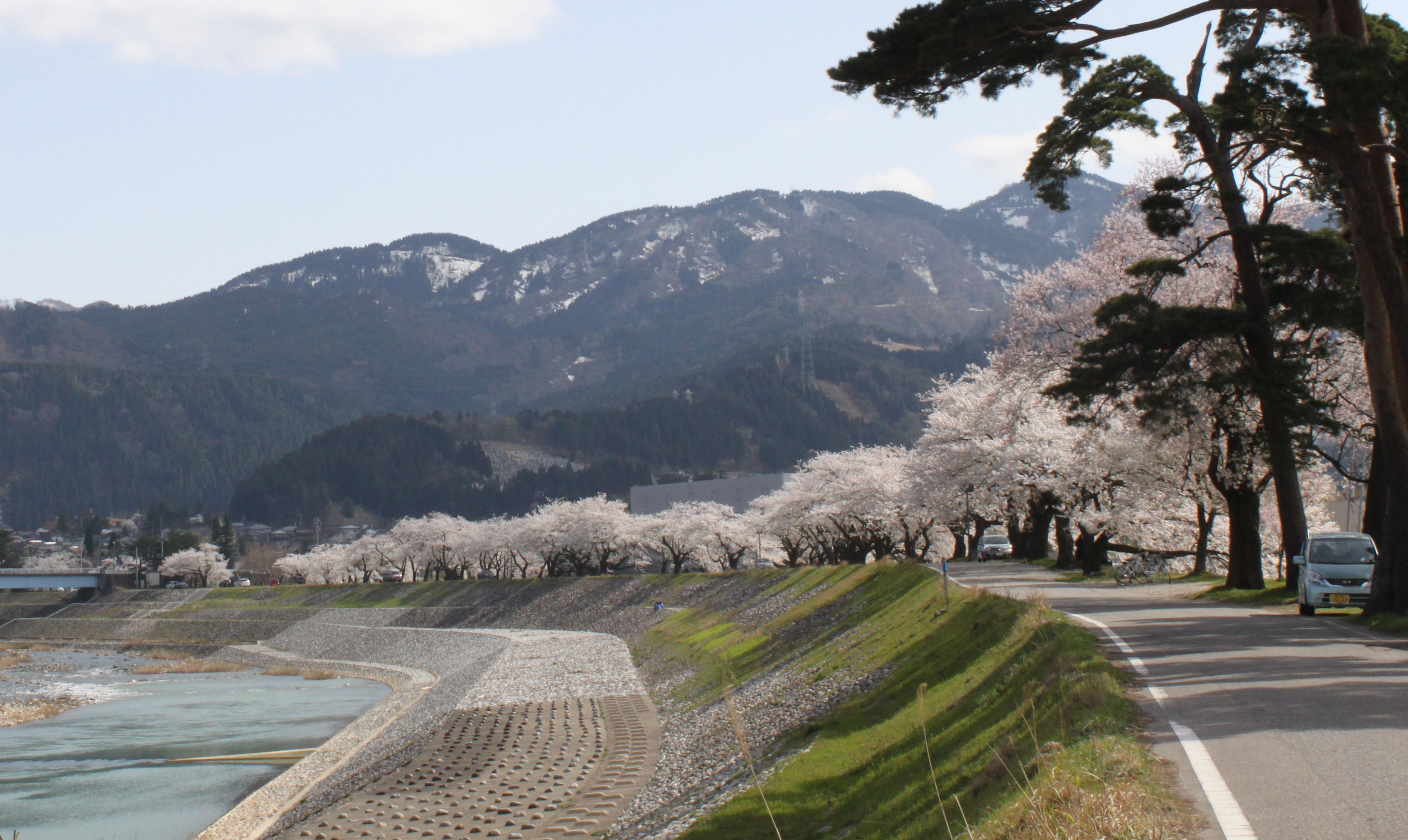 松川除け桜並木.jpg