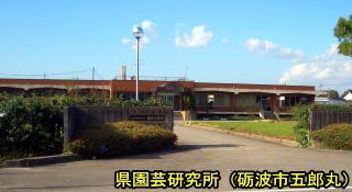 shiru117.jpg