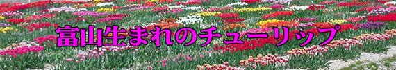 shiru119.jpg